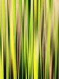 Abstraia raias verdes Fotografia de Stock