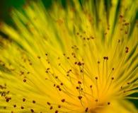 Abstraiga el fondo de la flor imagenes de archivo