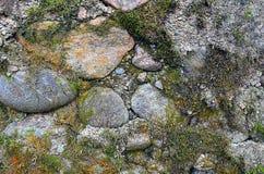 abstraiga el fondo pared de piedra cubierta con el musgo Imagen de archivo libre de regalías