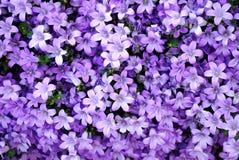Abstraiga la naturaleza púrpura imagenes de archivo