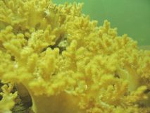 Abstrait - corail mou Images stock