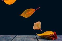Abstrait des lames Photo libre de droits