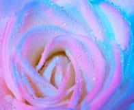 Abstrait mouillez le fond rose Image stock