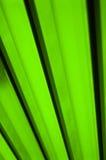 Abstrait vert Image stock