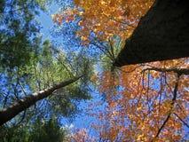 Abstrait vertical Images libres de droits