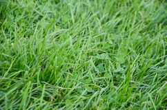 abstrakci tła trawy zieleń naturalna Zdjęcia Stock