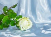 Abstrakcja biały róży tło Fotografia Royalty Free