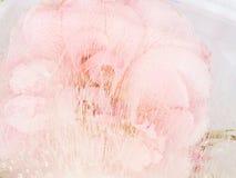 Abstrakcja z menchia kwiatem Obraz Stock