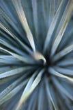 abstrakcjonistyczna agawa Zdjęcia Royalty Free