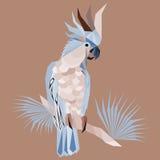Abstrakcjonistyczna ary papuga ilustracji