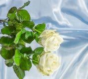 Abstrakcjonistyczna biel róża na lustrzanym tle Zdjęcie Royalty Free