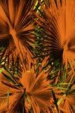 Abstrakcjonistyczna bocznia opuszcza w dramatycznych fałszywych kolorach od Floryda Obrazy Stock