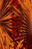 Abstrakcjonistyczna bocznia opuszcza w dramatycznych fałszywych kolorach od Floryda Fotografia Stock