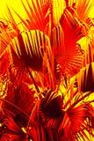 Abstrakcjonistyczna bocznia opuszcza w dramatycznych fałszywych kolorach od Floryda Obraz Stock