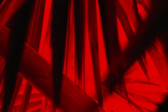 Abstrakcjonistyczna bocznia opuszcza w dramatycznych fałszywych kolorach od Floryda Zdjęcie Royalty Free