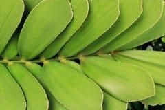 Abstrakcjonistyczna czarna czarna zmielona zielona roślina Obrazy Royalty Free