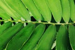 Abstrakcjonistyczna czarna czarna zmielona zielona roślina Zdjęcia Royalty Free
