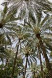 abstrakcjonistyczna daktylowa palma Fotografia Royalty Free