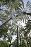 abstrakcjonistyczna daktylowa palma Zdjęcia Stock