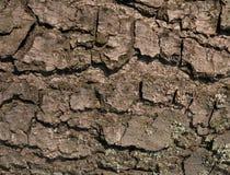 Abstrakcjonistyczna drewno barkentyny tekstura Fotografia Royalty Free