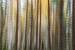 Abstrakcjonistyczna drzewna tapeta - akcyjna fotografia Zdjęcia Stock