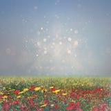Abstrakcjonistyczna fotografia dzikiego kwiatu pole i jaskrawi bokeh światła przecinający proces skutek Obrazy Royalty Free