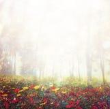 Abstrakcjonistyczna fotografia dzikiego kwiatu pole i jaskrawi bokeh światła przecinający proces skutek Zdjęcie Royalty Free