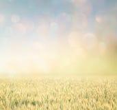 Abstrakcjonistyczna fotografia pszeniczny pole i jaskrawi bokeh światła Zdjęcia Stock