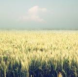 Abstrakcjonistyczna fotografia pszeniczny pole i jaskrawi bokeh światła Obrazy Stock