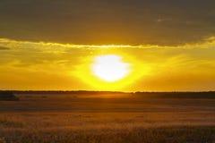 Abstrakcjonistyczna fotografia pszeniczny pole i jaskrawi bokeh światła Zdjęcie Royalty Free