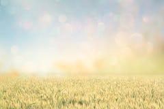 Abstrakcjonistyczna fotografia pszeniczny pole i jaskrawy niebo Instagram skutek Zdjęcia Royalty Free
