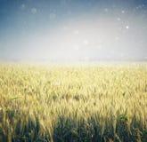 Abstrakcjonistyczna fotografia pszeniczny pole i jaskrawy niebo Instagram skutek Zdjęcie Royalty Free