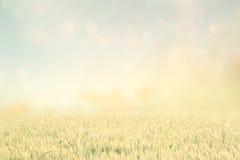 Abstrakcjonistyczna fotografia pszeniczny pole i jaskrawy niebo Instagram skutek Zdjęcia Stock