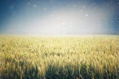 Abstrakcjonistyczna fotografia pszeniczny pole i jaskrawy niebo Instagram skutek Fotografia Stock