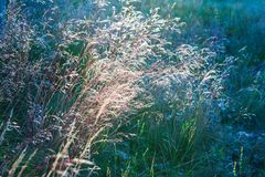 Abstrakcjonistyczna fotografia z outsole na trawie i liściach Fotografia Royalty Free