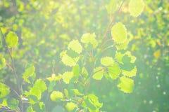 Abstrakcjonistyczna fotografia z outsole na trawie i liściach Zdjęcie Stock