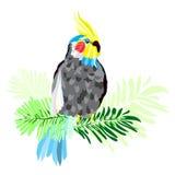 Abstrakcjonistyczna jaskrawa papuga ilustracja wektor