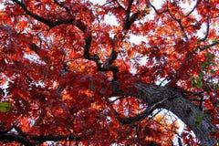 abstrakcjonistyczna jesień Fotografia Stock