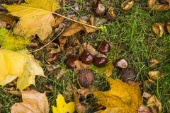abstrakcjonistyczna jesień Zdjęcie Stock
