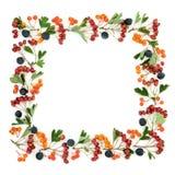 Abstrakcjonistyczna jesieni jagody granica obraz royalty free