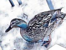 Abstrakcjonistyczna kaczka patrzeje dla jedzenia Obrazy Royalty Free