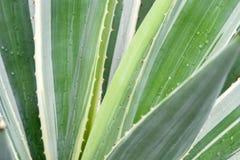 abstrakcjonistyczna kaktusowa roślina Obrazy Royalty Free