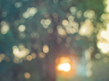 Abstrakcjonistyczna kolorowa plama de skupiał się tło cienia drzewa z światłem słonecznym Zdjęcia Royalty Free