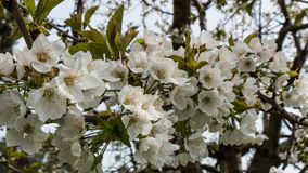 abstrakcjonistyczna kwiecista granica zieleń liście i biali kwiaty Fotografia Royalty Free