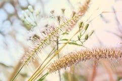 Abstrakcjonistyczna Malutka kwiat trawa Obrazy Royalty Free