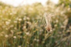 Abstrakcjonistyczna miękka część zamazujący tło dokrętki trawa i łąki pole ja Obraz Stock