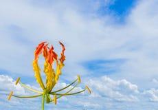 Abstrakcjonistyczna miękka ostrość oranie, tillage, zrywanie, tillage, roślina Zdjęcia Royalty Free
