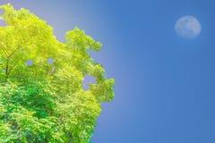 Abstrakcjonistyczna miękka ostrości powierzchni tekstura Korkowy drzewo, indianina korek, Millingtonia hortensis, Bignoniaceae, r Obrazy Stock