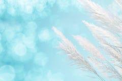 Abstrakcjonistyczna miękka ostrość chłodno błękitny oświetleniowy miękkości piórka trawy tło Obraz Stock