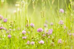 Abstrakcjonistyczna natura kwitnie tła lato i wiosnę Obrazy Stock